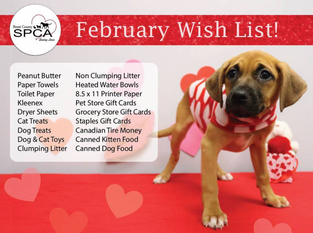 list of items for donation to the SPCA in Brantford with a cute puppy donning valentines day style vest looking like it needs some treats